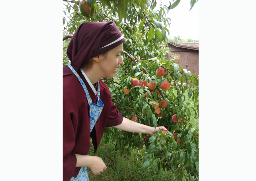 Sister Gemma Maria picking peaches